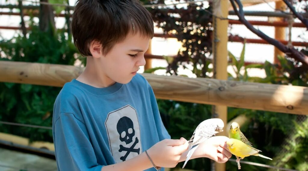 boy feeding a parakeet at the Audubon Aquarium of the Americas in New Orleans, Louisiana
