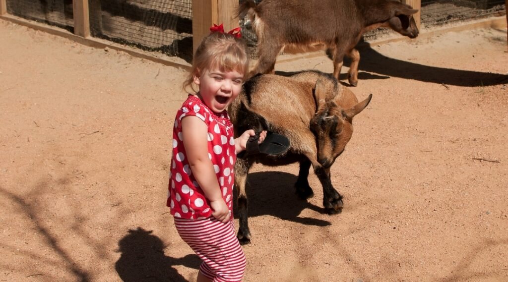 toddler in the petting zoo at Audubon Zoo New Orleans