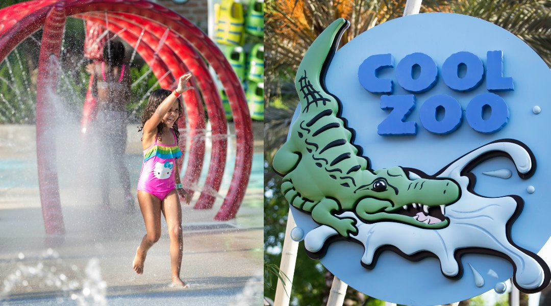 Six Things You Need To Know About Cool Zoo at Audubon Zoo