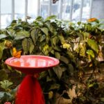 Six Things You Need To Know When Visiting The Audubon Butterfly Garden and Insectarium