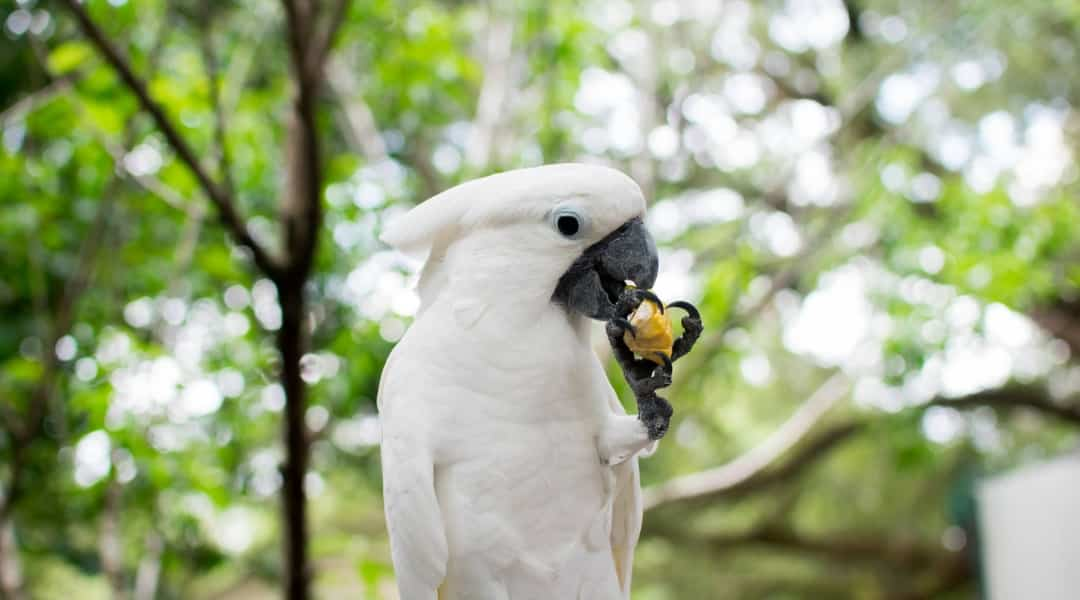 Everything You Need To Know About Visiting Uncle Sandy's Macaw Bird Park
