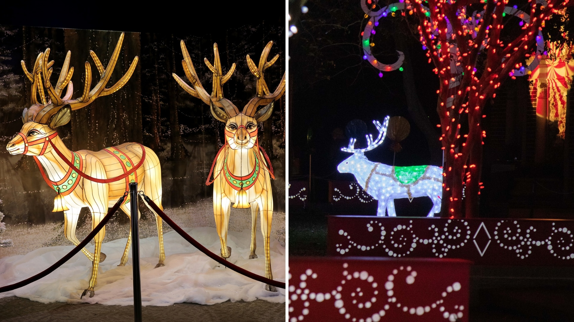 Reindeer lights at Audubon Zoo in New Orleans