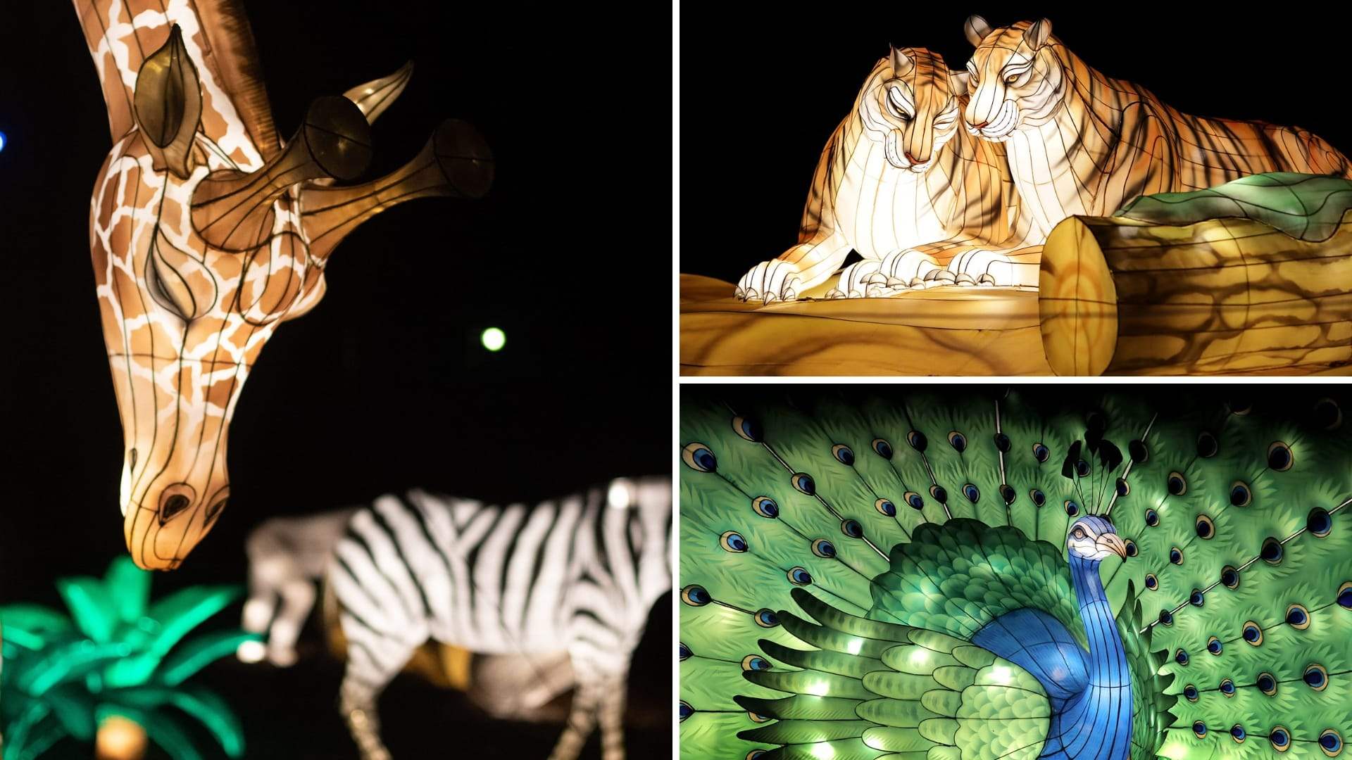 Zoo Lights at Audubon Zoo in New Orleans